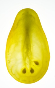 Beam's Yellow Pear
